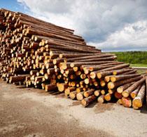 关于人造板国际标准化的方案已起草